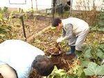 サツマイモ収穫祭 (2).jpg