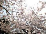 春が来た (1).JPG