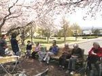 春が来た (2).JPG