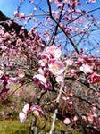 春が近づいた (6).JPG