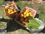 季節の収穫 (4).JPG