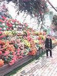 富士花鳥園 (1).jpeg